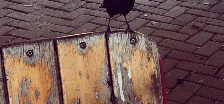 Starlings Inspiration